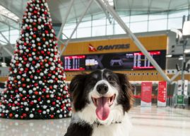 Earn Qantas Points when leaving your pet with Mad Paws